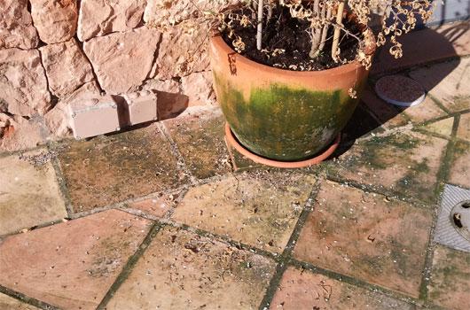 Suelo for Suelos exteriores de jardin